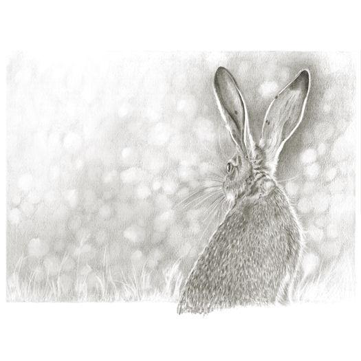 ...And the hare