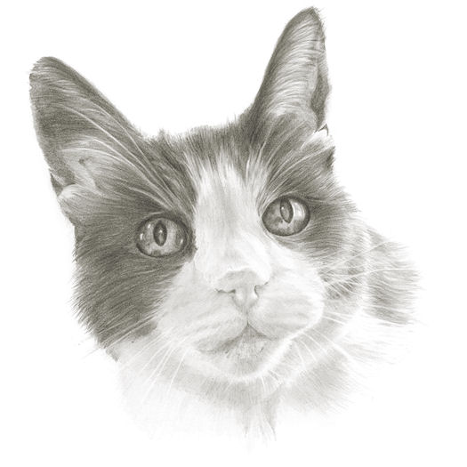Pencil portrait of Bertie