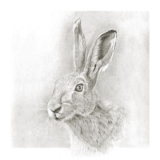 Pencil portrait of Hare today